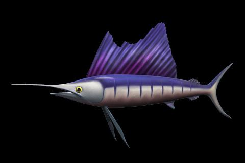 Segelfisch