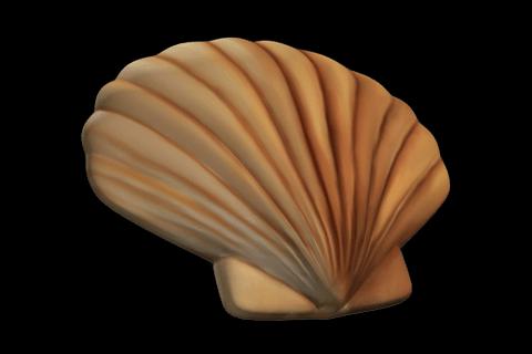 Jakobsmuschel